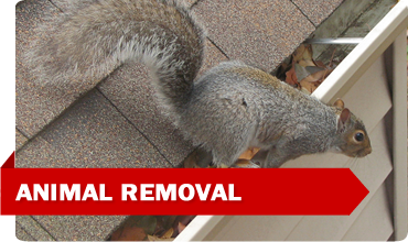 f-animalremoval2-